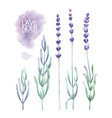watercolor lavender collection vector image vector image