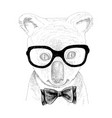 hand drawn portrait koala bawith accessories vector image vector image