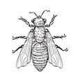house fly line art vector image vector image