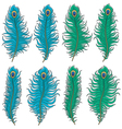 set colored peacock feather vector image