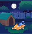 corgi sleeping on meadow near his house on vector image