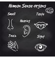 Human sense organs on chalkboard background vector image