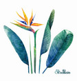 watercolor strelitzia collection vector image vector image
