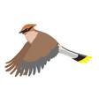 waxwing isolated on a white background graphics vector image