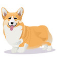 welsh corgi dog vector image vector image