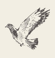 beautiful flying dove hand drawn sketch vector image