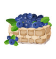 wicker basket with blueberries realistic vector image vector image