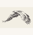 flying eagle hand drawn sketch vector image vector image
