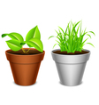 Plant in a pot vector image