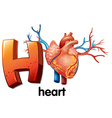 A letter H for heart vector image vector image