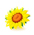 bright yellow sunflower icon blossom isolated vector image vector image