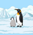 cartoon mother and baby penguin on snowy field vector image vector image
