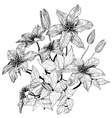 Hand Drawn Clematis Flower Sketch vector image vector image