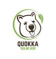 modern head animal quokka logo vector image