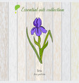 pure essential oil collection iris wooden vector image vector image
