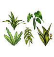 tropical leaves dense jungle collection hand vector image vector image