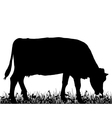 Cow in the meadow vector image vector image