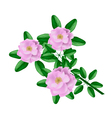 Pink Damask Rose on A White Background vector image vector image