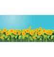 sunflowers 380 vector image