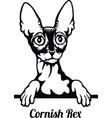 cornish rex cat - cat breed cat breed head vector image vector image