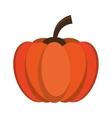 pumpkin harvest bittersweet vegetable icon vector image