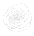 Black and white rose isolated on white