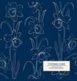 botanical of daffodil vector image vector image