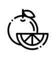 healthy food fruit orange thin line icon vector image vector image