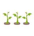 green plants in garden beds set cartoon style vector image vector image
