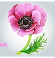 Pink Anemone vector image vector image