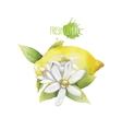 Watercolor lemon vignette vector image vector image