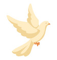 white dove pigeon faith and love vector image vector image