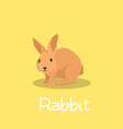 a lovely rabbit pet design on yellow vector image