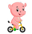 cute hippopotamus bicycling vector image vector image