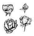 great collection of highly detailed hand drawn vector image vector image