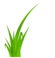 Summer Abstract Background with Grass vector image vector image