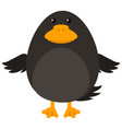 black bird on white background vector image