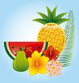 tropical fruit vector image vector image