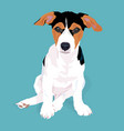 adorable cute jack russell terrier dog sitting on vector image