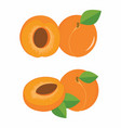 apricots colorful set vector image vector image