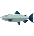 fish salmon icon isolated vector image