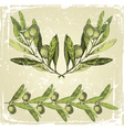 hand drawn olive branches ornament vector image