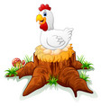 hen brooding her egg on the stump vector image vector image