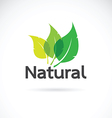 Natural logo design template vector image vector image