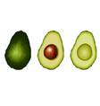 set of avocado fruit vector image vector image
