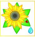 sunflower ladybird vector image