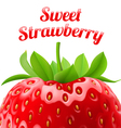 Poster sweet strawberries vector image vector image