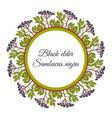 wreath european black elderberry vector image