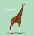 a tall giraffe design on green background vector image