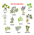 collection of anti aging herbs vector image vector image